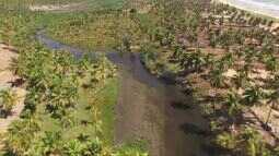 Confira as belezas naturais da Lagoa do Pau, em Coruripe