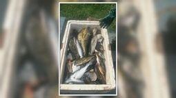Polícia ambiental apreende 250 quilos de pescado ilegal em Santana