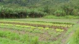 Inter TV Rural apresenta diferença dos produtos orgânicos e hidropônicos