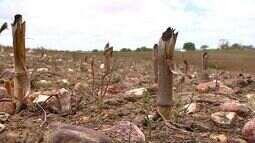 Governo Federal decreta situação de emergência em Canindé