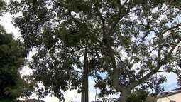 Proximidade de árvores à rede elétrica oferece risco em Juiz de Fora