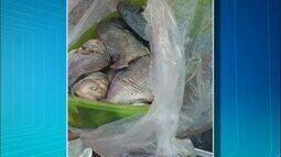 Polícia apreende 50 kg de pescado na TO-010