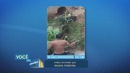 Homem se arrisca para salvar cachorro que caiu em cratera