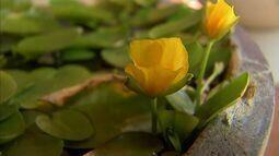 Jardim aquático: confira dicas para deixar sua casa decorada com plantas