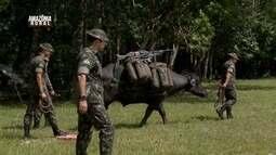Parte 3: Veja como búfalos são usados em missões do exército brasileiro
