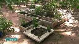 Morador do Tucuruvi transforma terreno abandonado em viveiro de plantas