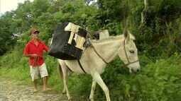 Após ser roubado e levado dentro de carro, burro 'Branquinho' volta à fazenda do dono