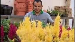Plantas precisam de cuidados diferenciados; jardineiro de Divinópolis fala sobre espécies
