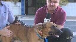 Cachorro reencontra dono que ficou internado em UTI de hospital em Limeira
