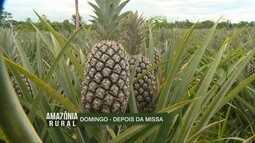 Confira os destaques do Amazônia Rural deste domingo (12)