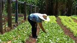 Conheça mulheres que vivem e trabalham no campo