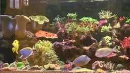 Criação de peixes vira hobbie e paixão entre cearenses