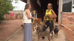 Moradora de Curitiba cuida de mais de cem cães na própria casa