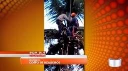 Homem sobe em coqueiro de 30 metros e precisa ser resgatado pelos Bombeiros