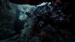 Globo Natureza: Caverna da Sapata