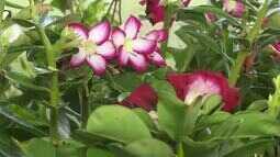 Começou mais uma edição da Feira de Flores de Holambra em Boa Vista