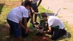 Escolas públicas recebem mudas de árvores frutíferas para a educação ambiental