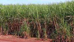 Treinamento é feito em Uberaba sobre defensivos agrícolas em lavouras de cana-de-açucar