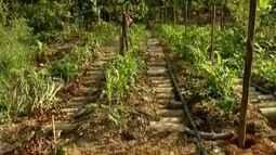 Projeto desenvolvido em Santana do Paraíso recupera áreas degradadas pela agricultura