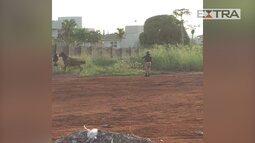 Policiais federais matam cavalos a tiros em Goiás