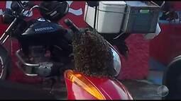 Enxame de abelhas assusta dono de motocicleta em Itabuna, no sul do estado