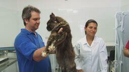 Prefeitura fala sobre o abandono de animais em Santos