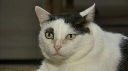 Consumo de pouca água pode causar doenças renais nos gatos