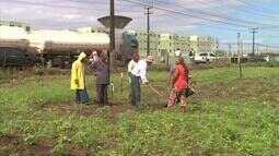 Plantio de feijão ajuda a beneficiar famílias em Alagoas