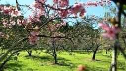Cerejeiras Festival começa nesta quarta-feira em Garça com várias atrações e novidades
