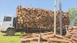 Motorista é multado em R$ 16 mil por transportar madeira ilegalmente em Vilhena