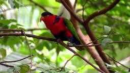 Globo Natureza: Parque dos Pássaros