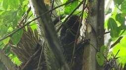 Parque na BA é um dos 5 pedaços de floresta mais ricos do mundo