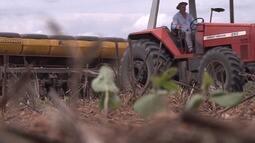 Mirante Rural destaca período de 'vazio sanitário' no sul do Maranhão