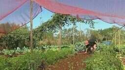 Número de agricultores que investem em produtos orgânicos cresce mais de 200% na região