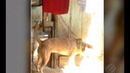 Moradores do bairro da Condor denunciam maus-tratos contra animais em Belém