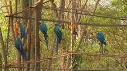 Zoológico de Araçatuba depende de licenças ambientais para aumentar quantidade de animais