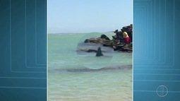 Prefeitura confirma que animal visto por banhistas em praia de Búzios, RJ, era um tubarão
