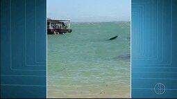 Vídeo mostra tubarão em praia de Armação dos Búzios, no RJ