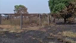 Fogo destrói produções de hortaliças e pastagens em assentamento