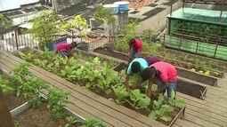 Projeto Verdejando ensina comunidades do Centro do Recife a plantar e a colher vegetais