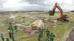 Carcaça de baleia jubarte é retirada da orla de Salvador