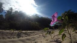Ilha das Canárias combina extrativismo e preservação da natureza (Bloco 01)