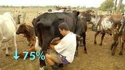 Estiagem provoca perda de dois terços da produção de leite em São João da Barra, no RJ