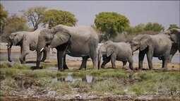 Decisão de Donald Trump sobre caça a elefantes preocupa ambientalistas