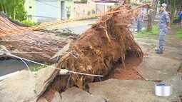 Chuva causa estragos em São José dos Campos