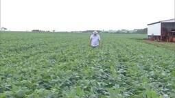 Agricultores de MS terminam o plantio da soja e esperam por uma boa safra