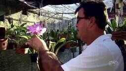 Plantar, Cultivar e Viver: saiba como cultivar uma orquídea da maneira correta