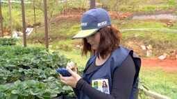Inter TV Rural relembra os trabalhos no Censo Agropecuário de 2017