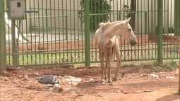 Veterinários da UnB trabalham na reabilitação de animais vítimas de maus tratos