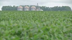 Com atraso na soja, os cultivos de segunda safra seguem lentos
